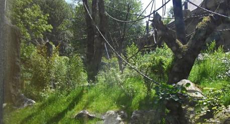 Bonobos DSCF6599web