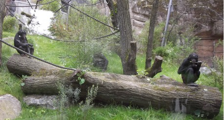 Bonobos DSCF6692web