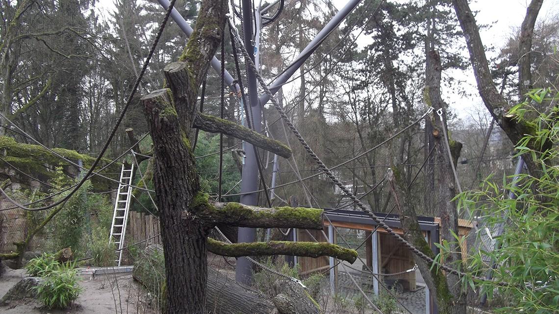 Bonoboanlage-Zoo-Wuppertal_3