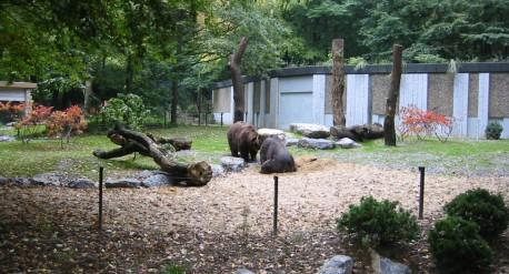 Braunbärenanlage-im-Zoo-Wuppertal_1