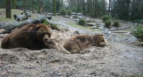 Braunbärenanlage-im-Zoo-Wuppertal_2
