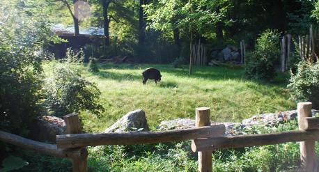 Okapianlage-im-Zoo-Wuppertal_1