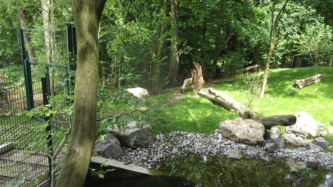 Wolfanlage-Zoo-Wuppertal_3